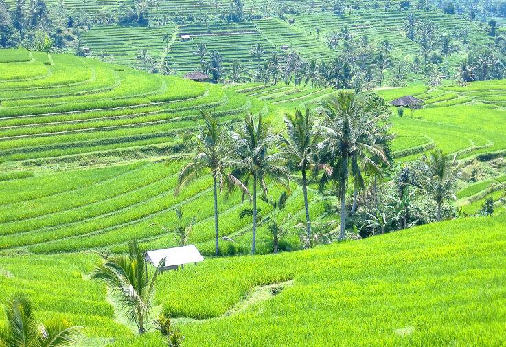 Le paysage culturel de la province de Bali, le système des subak sur la liste du patrimoine mondial