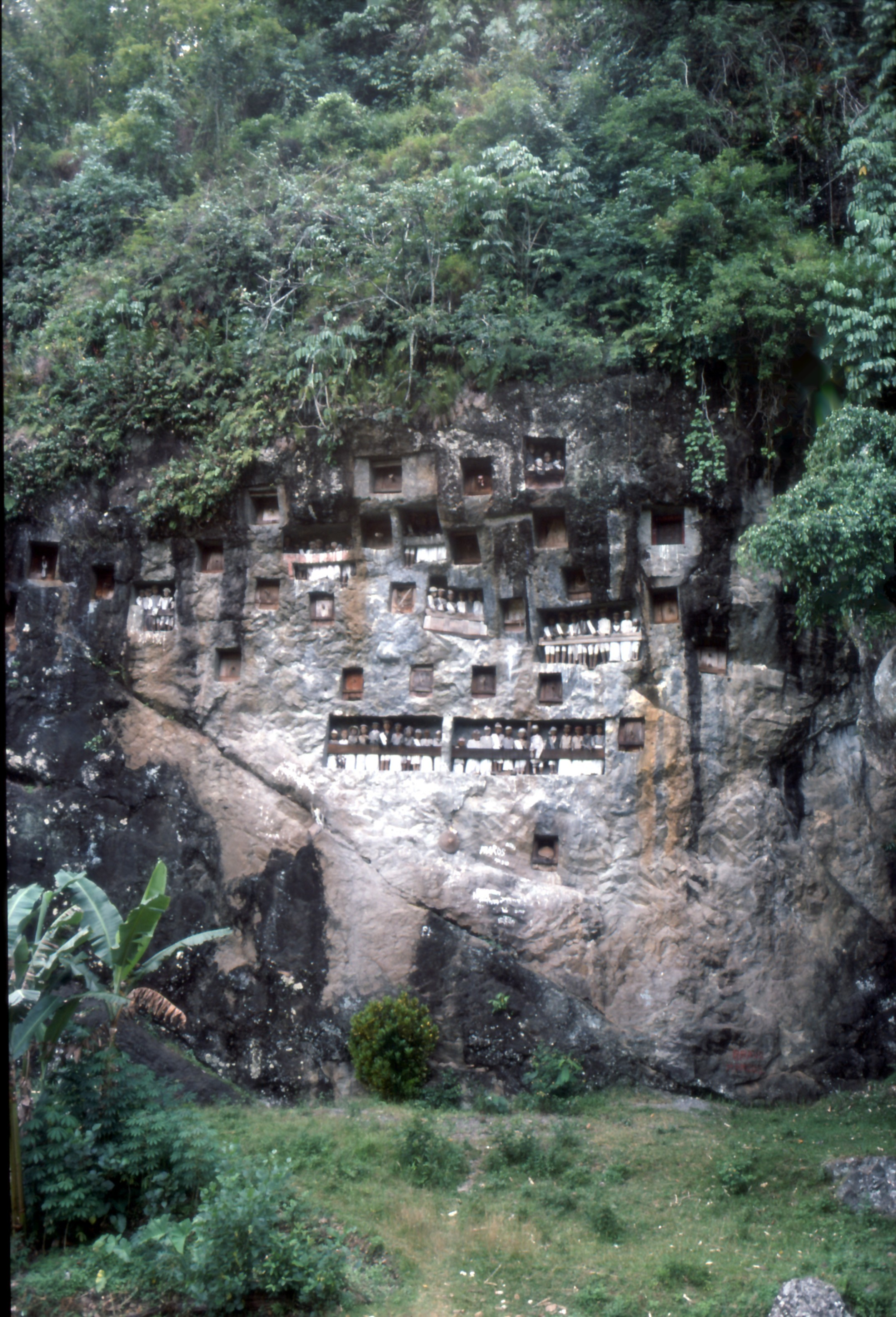 Tana Toraja, région montagneuse du sud de Sulawesi célèbre pour ses extraordinaires rites funéraires