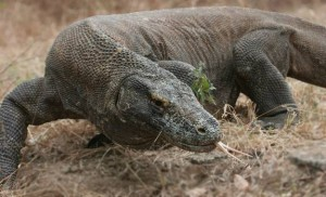 Le parc Komodo en Indonésie devenu nouvelle merveille de la Nature